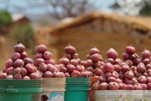 Red onions, Iringa