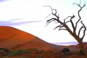 Sossusvlei dune and dead acacia