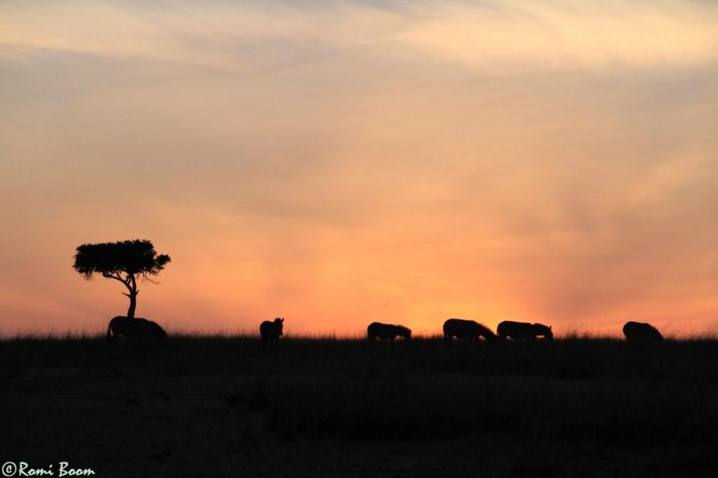 Mara daybreak