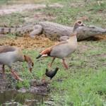 KrugerNP 2014_115
