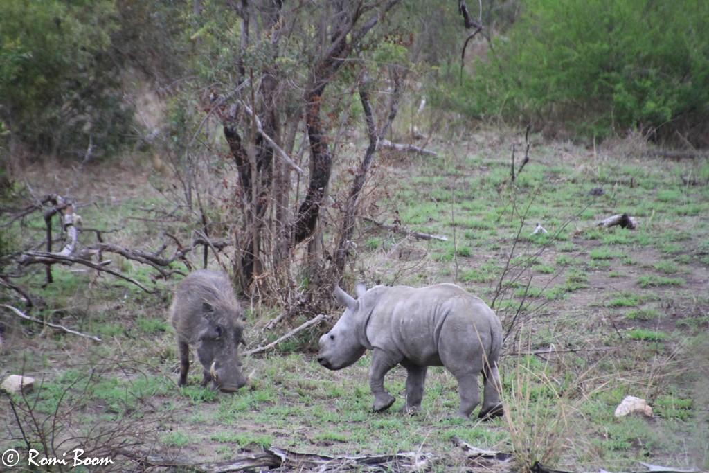 Baby rhino-0006