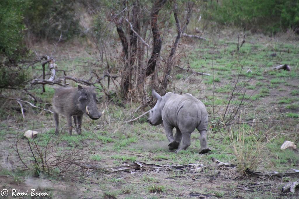 Baby rhino-0009